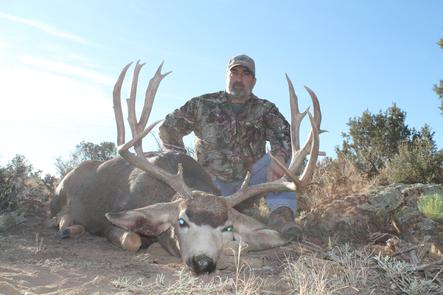 Premium Elk and Mule Deer Hunting in Colorado